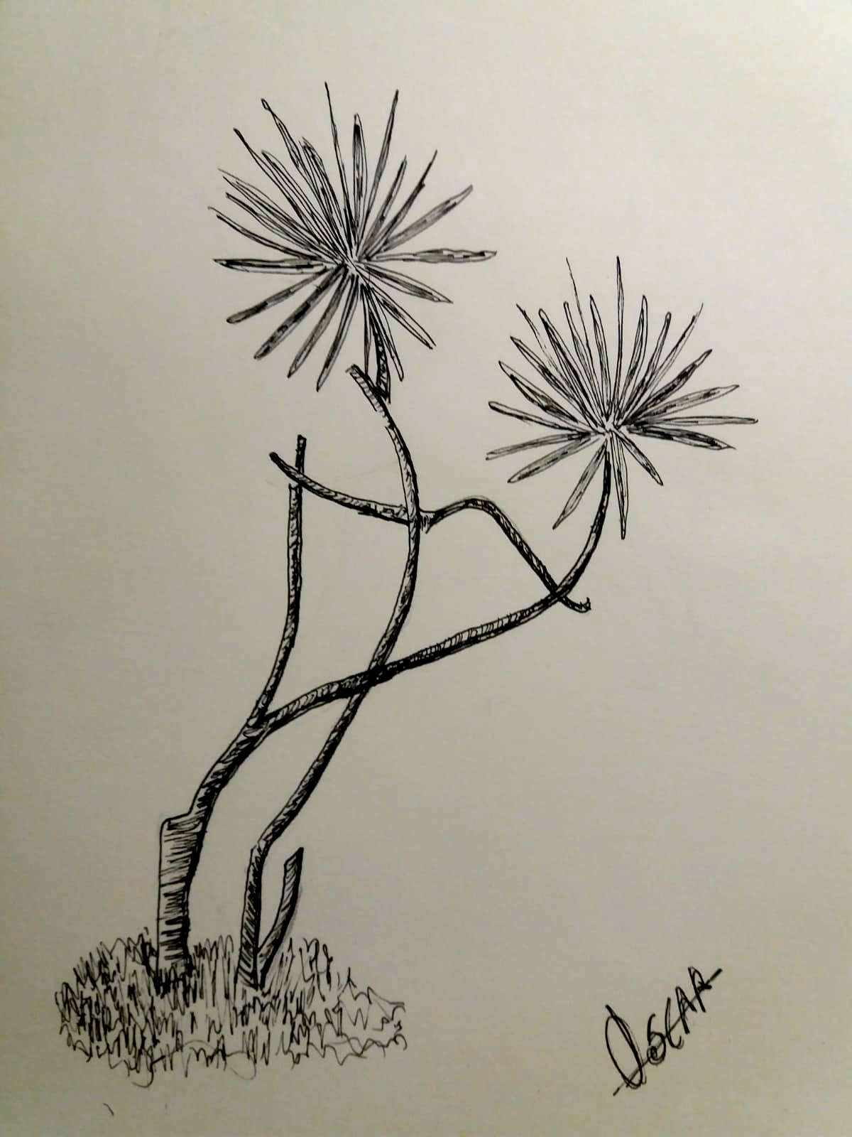 dibujo-palmeras