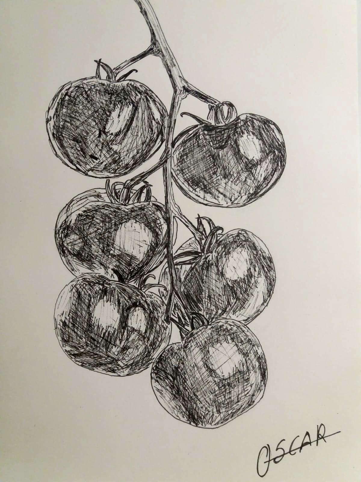 tomates-rama-dibujo